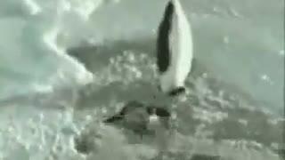 Funny Penguin Animals