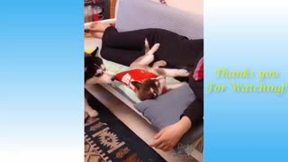 watch this video ,FUNNY ANIMAL VIDEO