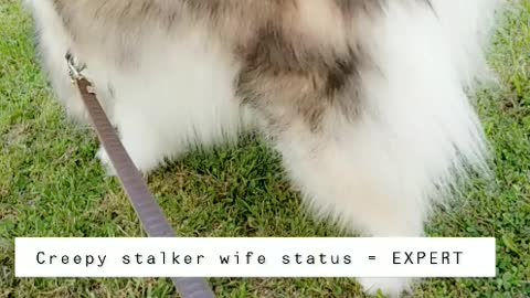 Stalking my husband