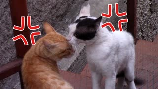 Two cats fight Funny 😂🤣