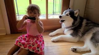 Husky sings along to little girl's harmonica solo