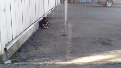a lonely dog is waiting for its master