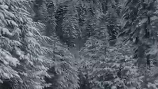 Georgia -Svaneti