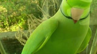 green pretty bird