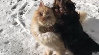 A dog hugging a cat♥️