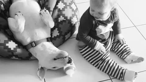 Baby and Bull Terrier share incredibly precious moment