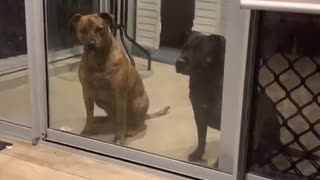 Spoiled dogs want to come back in 2 minutes later