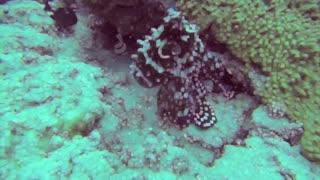 Octopus changes color - HD video - Part 4