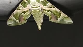 Green Butterfly Green colour