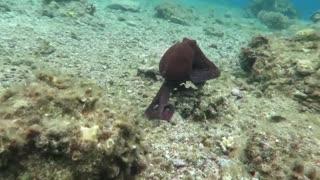 Octopus changes color - HD video - Part 3