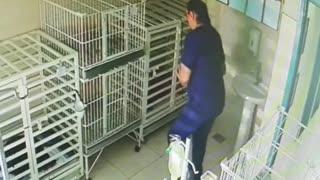 Mujer veterinaria canta a los perros enfermos (Dancing Queen)