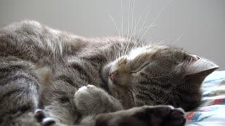 My cat is in a deep sleep