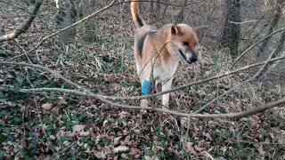 A Dog Biting A Bark Of Leafless