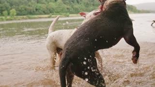 Lovely dog game