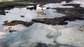 Dogs love to explore and research especially in pools