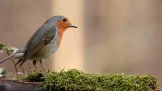 bird feeding on grass