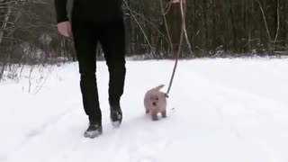 So Cute Puppy, Golden Retriever