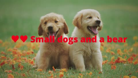 ♥♥ Small dogs and a bear