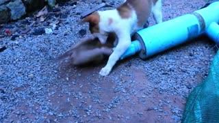 Amazing Animal Friendship - Dog Trying to Save a Stuck Baby Monkey