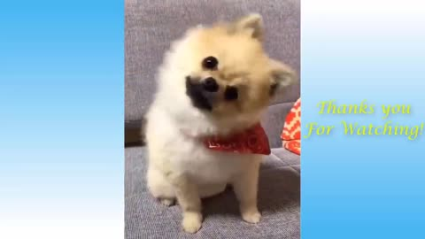 Very cute pets and funny animals compilation=== pets garden