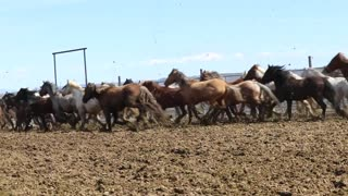 Wild Spayed Filly Futurity Episode 4 Coming Soon!