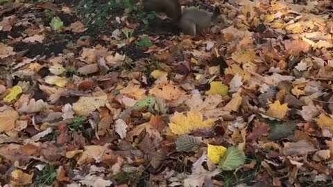 Taking My squirrel Into The Woods