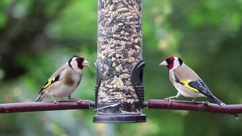 Playing Two beautiful birds