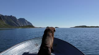 THE CUTE LABRADOR : I'M ON MY WAY FAR AWAY FROM YOU