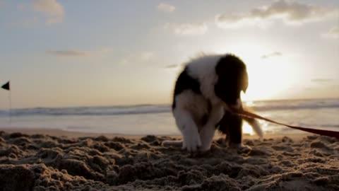 Playful Dog Beach Sand Play