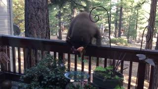 Curious Cubs Visit Backyard
