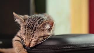 Watch the beautiful cat is asleep