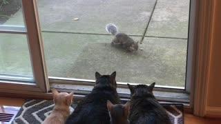 Kitties Watch on as Squirrels Enjoy Their Breakfast