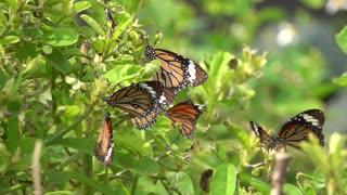 Beautiful Butterfly 2021