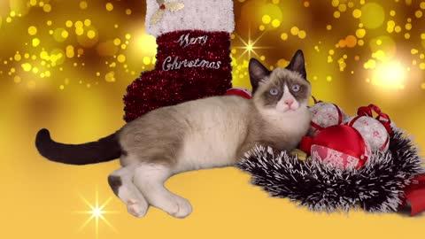 Cute Kitten Christmas animal