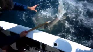 Incredible shark Attack!