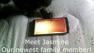 My new kitty, princess jasmine.