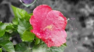 Love Flower Shower
