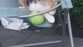 My Gorgeous Ginger Cat Protecive Over Tennis Ball