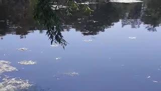 Lakes in Chernobyl!