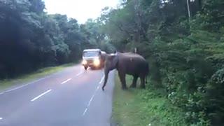 wild elephant polonnaruwa sri lanka