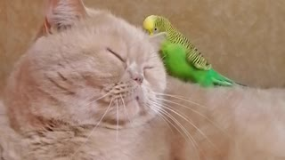 Cat and parrot live together in perfect harmony