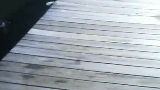 Car Nearly Drives Off Pier