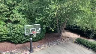 Son Makes Spectacular Shot with Frisbee