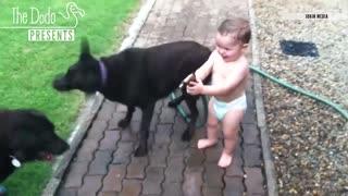 Baby Laughing At Pets