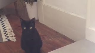 This black cat is curious about the sounds
