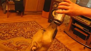 Dog drinks beer