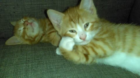 Cool Kitty Strikes A Pose