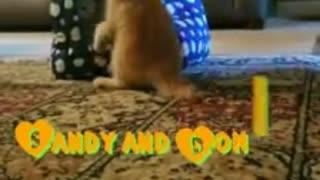 Kitten wants to play