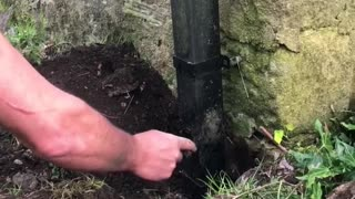 Dog and Human Team up to Rescue a Robin