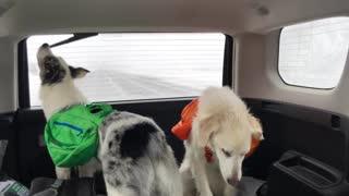 Dog Tries to Get a Taste of Windshield Wiper
